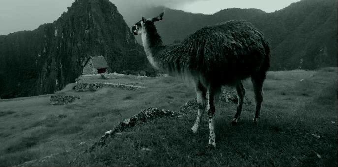 Machu Picchu, un lieu magique